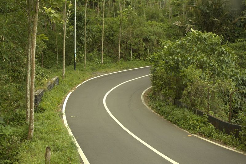 mountain bends Plant Road Tree Transportation Forest Curve Direction Nature Land Sign The Way Forward Marking Day Green Color Symbol Road Marking No People Non-urban Scene Growth Beauty In Nature Outdoors Dividing Line Long