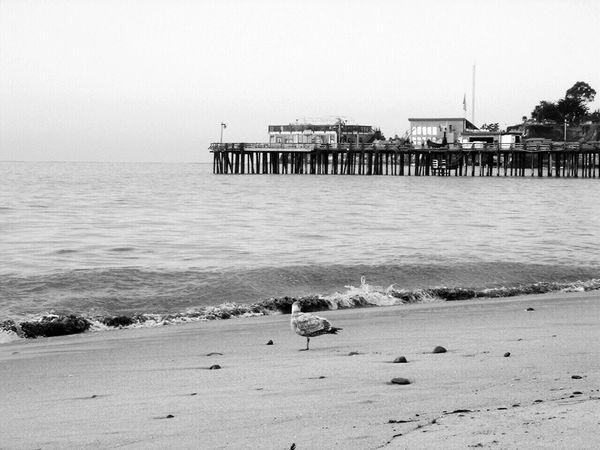 Ocean, Beach, Nature, Calm, Water Birds Non-urban Scene wharf, beach,seagull,sand