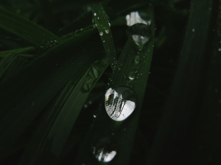Water RainDrop Macro Photography Shiny Dark Grass Beauty In Nature Twilight EyeEm Selects No People Nature Close-up Day Fragility