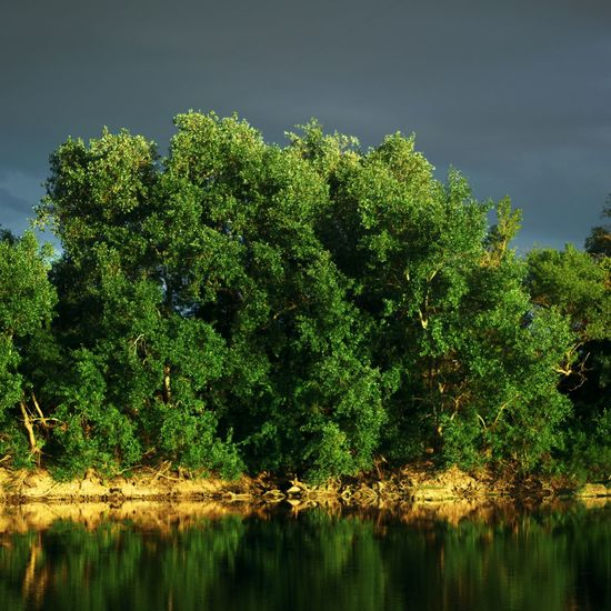Tree Reflection Water Green Color Nature Sky Outdoors Scenics No People Day Beauty In Nature Rural Scene Beauty In Nature River Forest Sunlight Beauty Front View Summer Plant