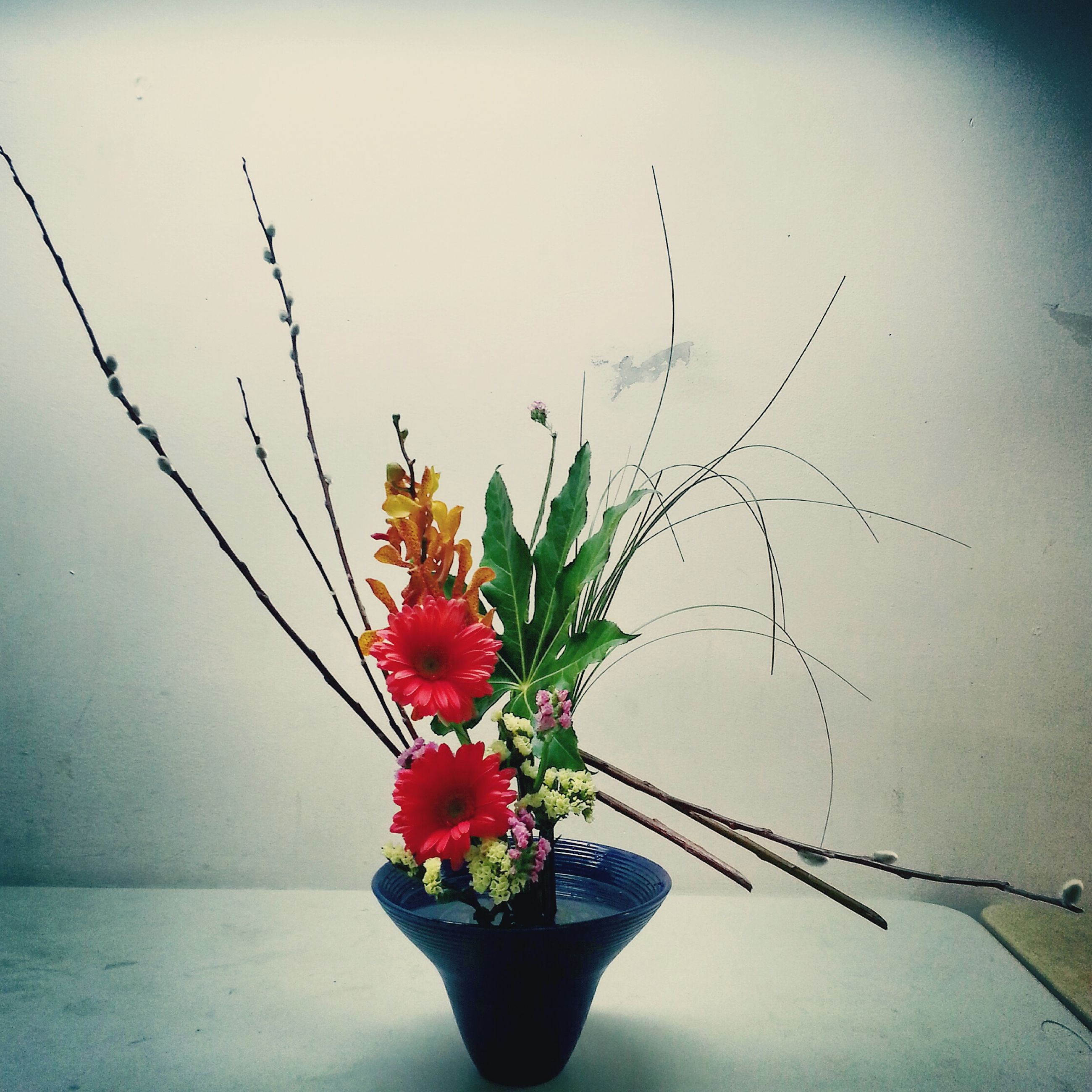 flower, freshness, fragility, stem, plant, red, petal, close-up, growth, nature, indoors, beauty in nature, bud, flower head, wall - building feature, insect, vase, animal themes, leaf, focus on foreground