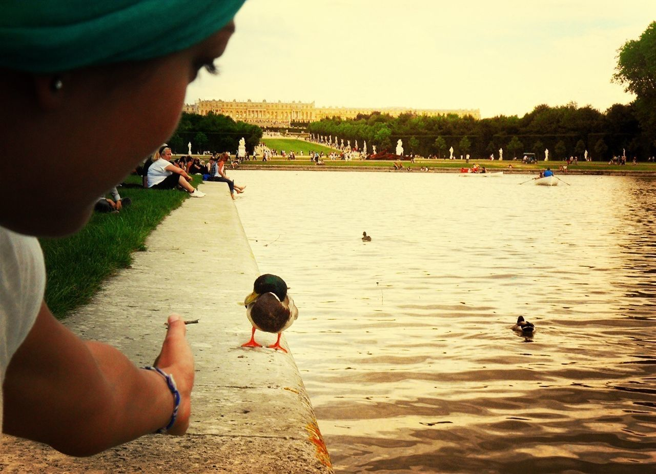 Cropped image of woman reaching for duck by pond against clear sky