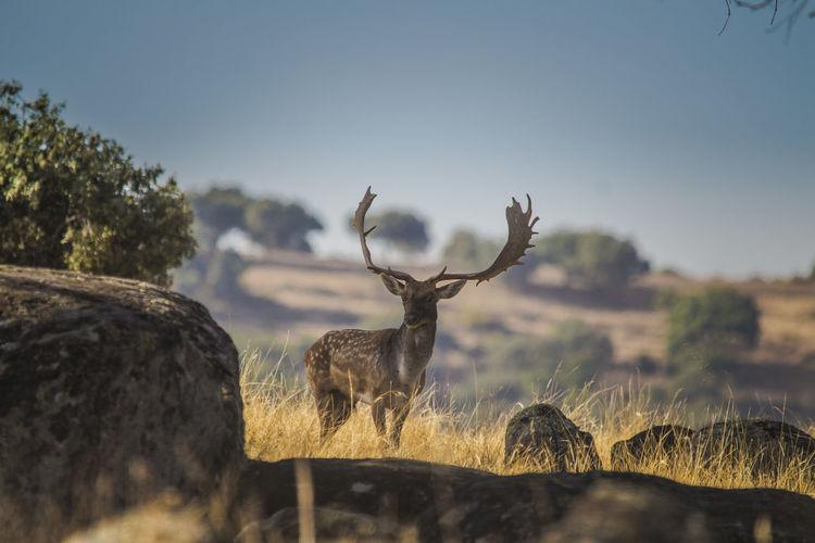 View Of Deer In Field