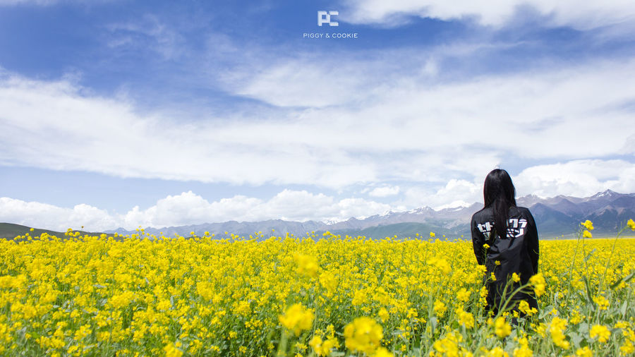 Beautiful blue sky & cole flowers in Menyuan Qinghai Nature Nature_collection Nature Photography Qinghai Flowers, Nature And Beauty