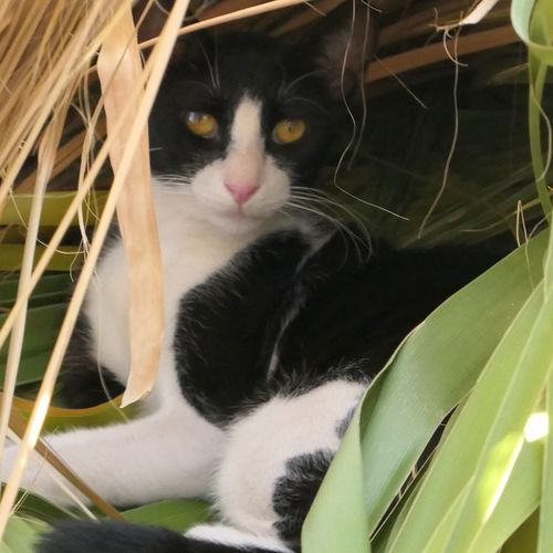 Nature Outdoors One Animal Animal Themes Animal Cat Domestic Cat Pets Feline Domestic Animals Close-up No People Portrait Looking At Camera Black Color Looking Animal Body Part