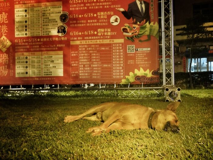 Dog Night