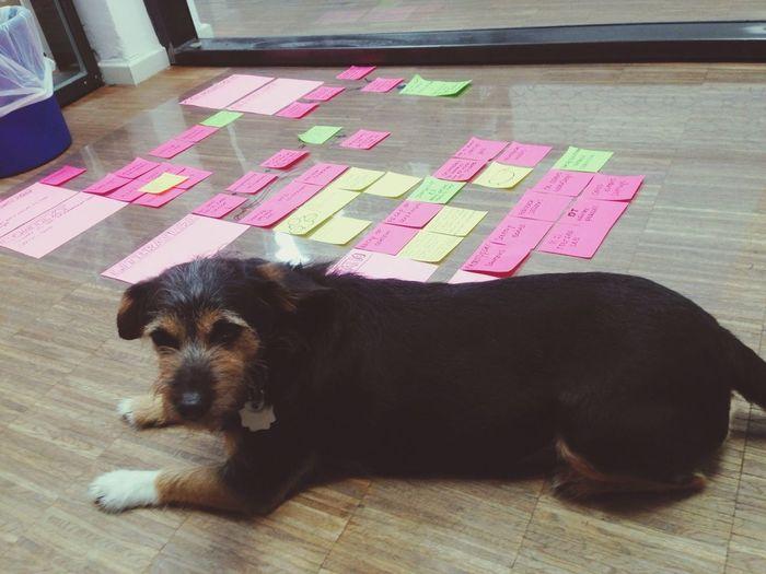 Startup Workshop with Dog