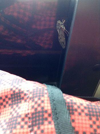 バスの席に座ったら先客さんがいました(゚д゚;) Bugs Bug Bus On The Bus Bus Ride Taking Photos Hanging Out EyeEm Best Shots EyeEm Best Edits 蝉