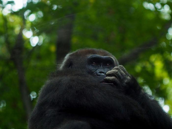 Monkey looking away in zoo