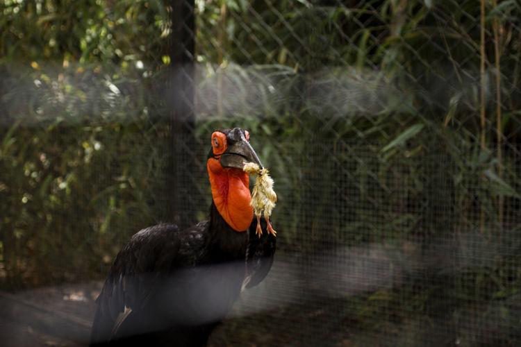 Close-up of bird perching in zoo