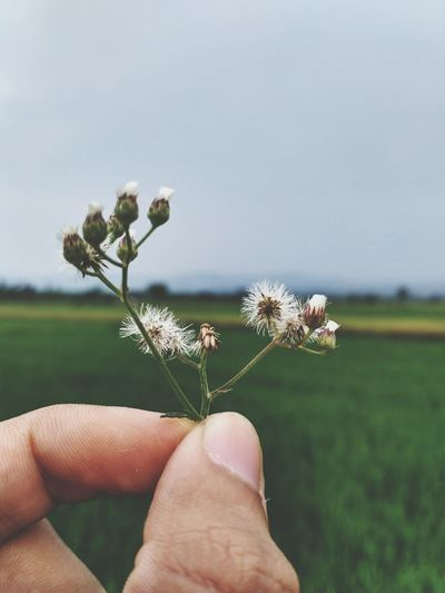 Not an epic photo Human Hand Personal Perspective Holding Sky Grass Flower Head Nature Human Body Part One Person Day Outdoors People Close-up Nature Flower Real People