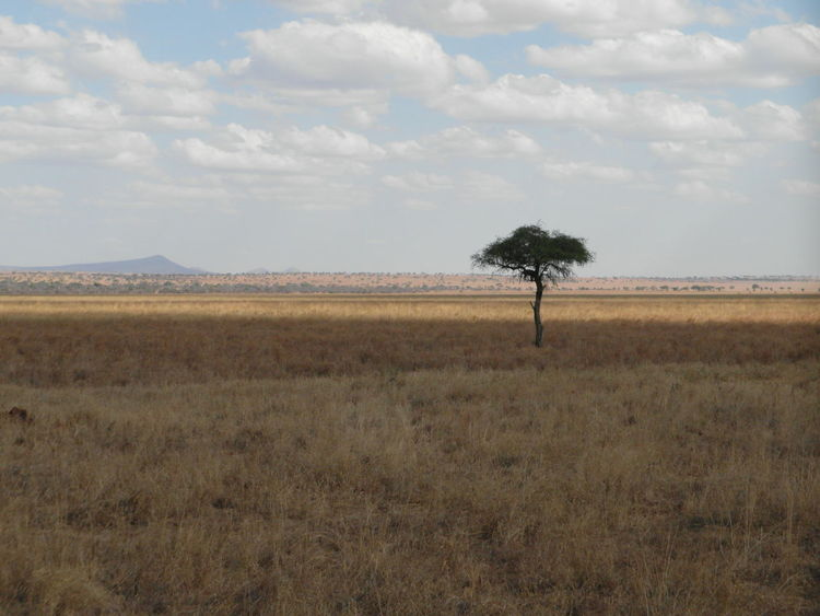Cloud - Sky Landscape Rural Scene Tree Day Desert Outdoors Sky Grass Beauty In Nature Scenics Arid Climate Nature No People Connected By Travel Tarangire Tanzania