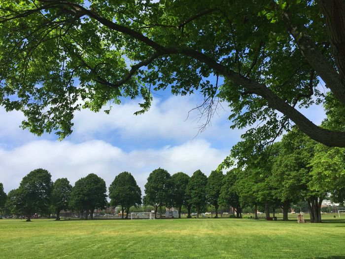 Beautiful day at Joe Moakley Park in Southie. Southie Boston Park Trees Enjoying Life IPhoneography IPhone The Essence Of Summer- 2016 EyeEm Awards Showcase June New England  Blue Sky Green Field Blue Sky Green Grass Urban Landscape Urban Park
