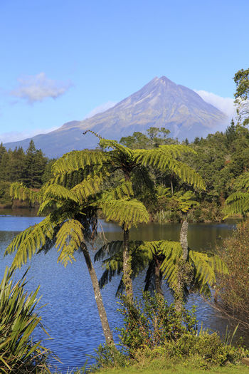 Paradise View Beauty In Nature Ferns Lake Landscape Mountain Nature New Zealand Scenics Taranaki Tranquility Tree Fern Volcano