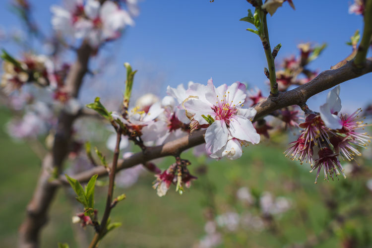 Flower Flowering Plant Plant Fragility Growth Vulnerability  Beauty In Nature Freshness Blossom Tree Springtime Branch Petal Close-up Nature Day Focus On Foreground Cherry Blossom Fruit Tree Twig No People Flower Head Pollen Outdoors Pink Color