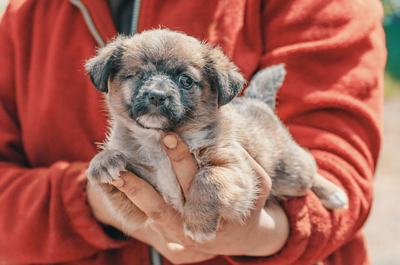 Close-up of person holding small dog
