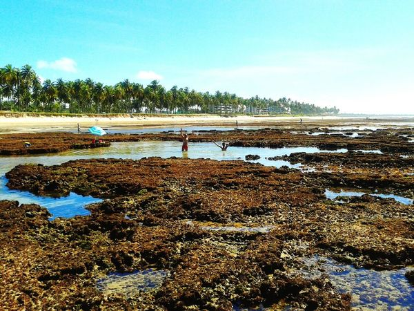 Praia do Paiva ... Recifes de corais. Beach Day Pernambuco -Brazil Brasil Brazil Pernambuco Paraiso☀🍃 Praia Beach Photography Beachphotography Whereilive Nordeste Brasileiro Paiva