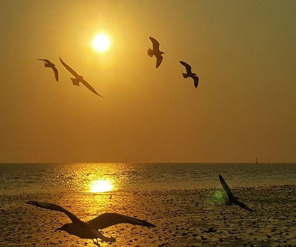 Spread your wings. It's time to fly. Make the leap. Own the sky. - Ms Moem Bangpu Mystiquecaptures Sunset Birds Thailand