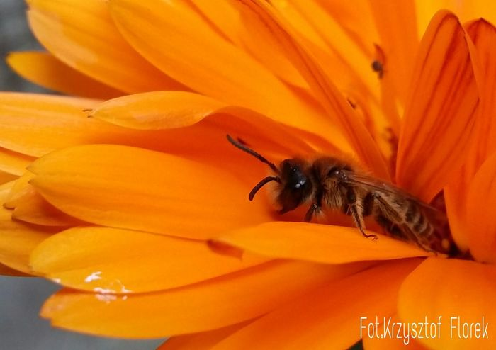 Photography Nature Insects
