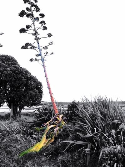 Clear Sky Growth Plant Dead Plant Nature Branch Day Death Tranquility Outdoors Tranquil Scene Solitude Dried Plant Scenics Non-urban Scene No People Beauty In Nature Shore Thorn Dead Tree EyeEm Best Shots EyeEm Nature Lover EyeEm Gallery EyeEm Geothermal Spa