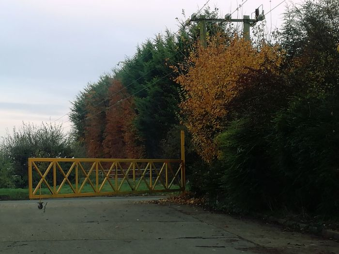Trees Gate Nature British Autumn Orange, Yellows And Greens