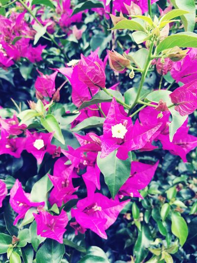 Pink Color Plant Flower Growth Nature Petal Beauty In Nature Fragility No People Leaf Outdoors Day Freshness Close-up Flower Head