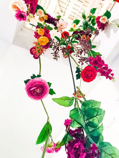 Dry Grass Dry Flower  Plant Flower Flowering Plant Leaf Plant Part Nature Beauty In Nature Decoration Freshness Pink Color Fragility Vulnerability  Flower Head Red Hanging
