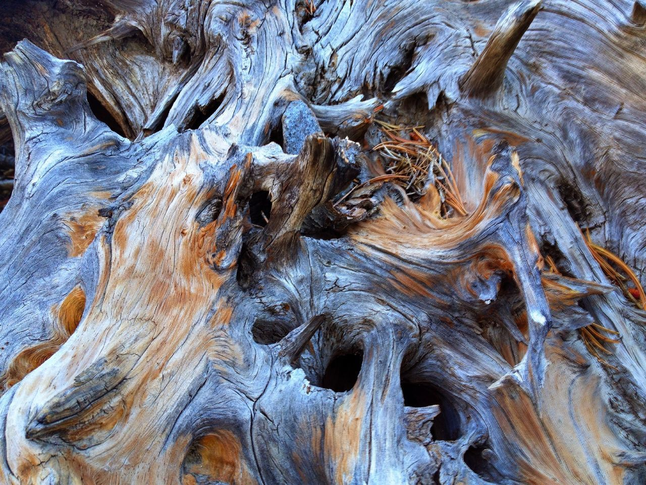Close-up view of drift wood