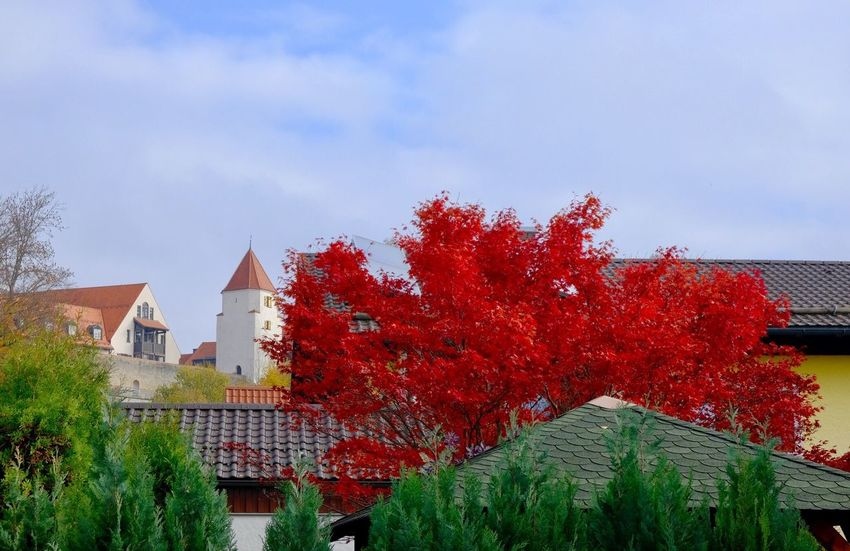 Schongau Architecture Built Structure Plant Building Exterior Building Tree Red Cloud - Sky Autumn Beauty In Nature Low Angle View