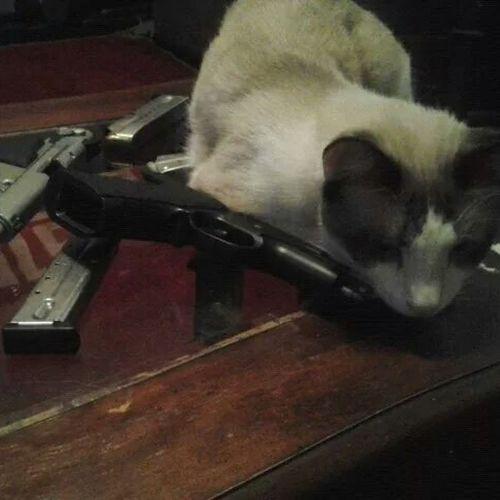 Steven likes to Cuddle with Guns Crazycat  .........Cat Kitty Guns Gunlove
