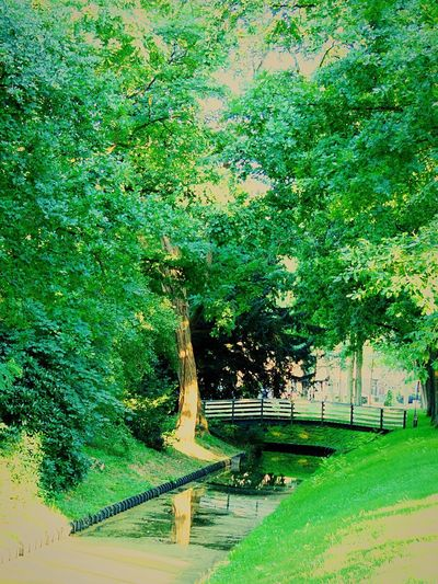 Green Grass Water Nature Trees And Nature Trees Bridge Photography No People Beautiful Summer Views Netherlands Wijchen Castle Garden Green Color Tree Growth Nature Park - Man Made Space Outdoors Day Beauty In Nature Road Architecture
