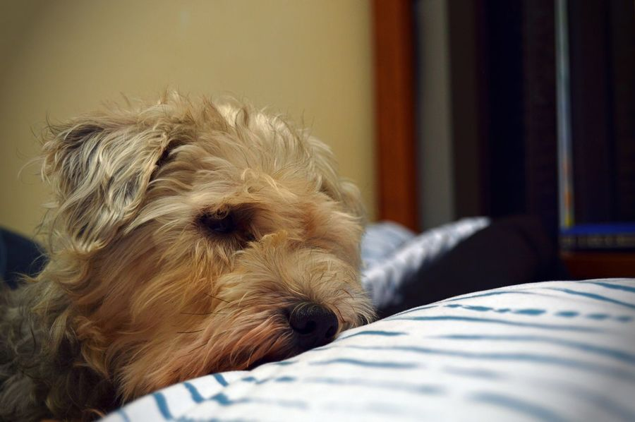 Relaxing Dog Love Cute Pet Family Adorable