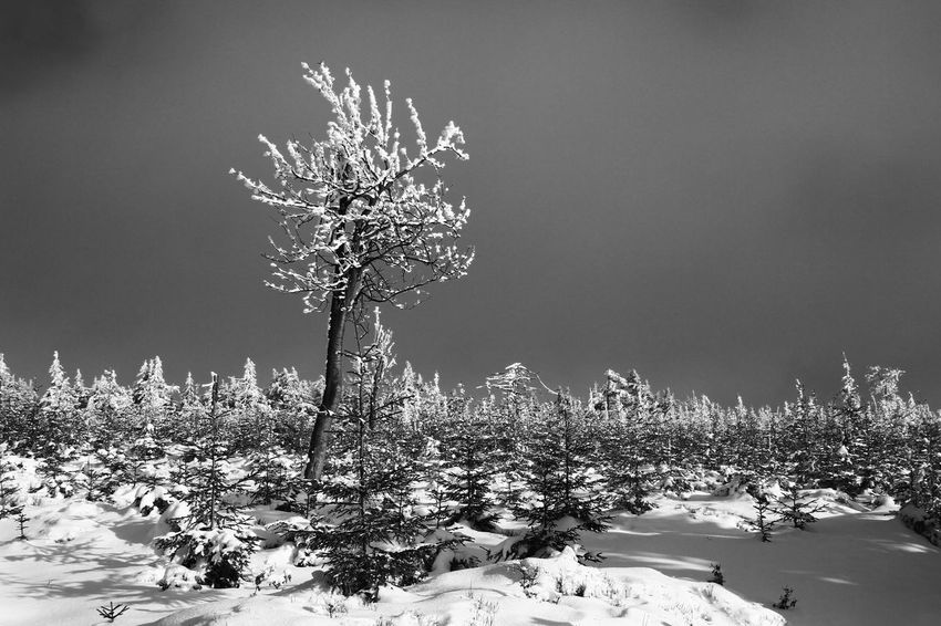 Bare Tree Beauty In Nature Clear Sky Cold Cold Temperature Frozen Landscape Nature Night No People Outdoors Scenics Sky Snow Tranquility Tree Weather Winter