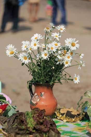 Daisies in a
