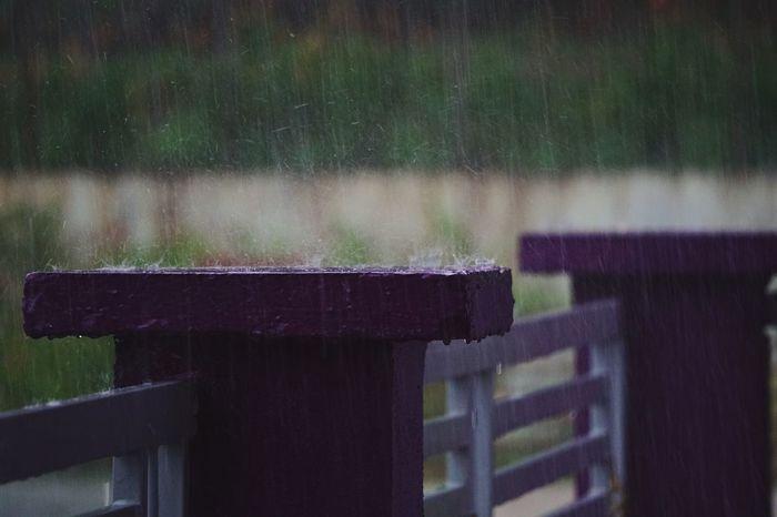 Rain Rainy Days Cold Waterdrop Raindrops Purple Water Nature
