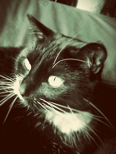 Furmagoo Neko Cat