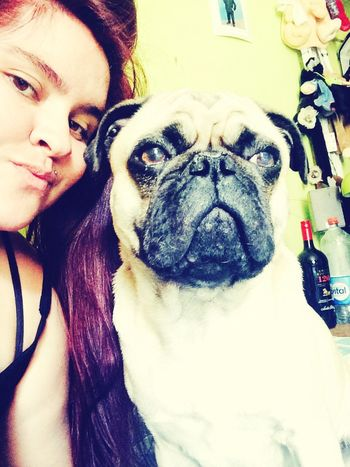 Pug Life  Pequeño Frank Pug Pug Chile Pug Life ❤ Pug Love Ilovepugs