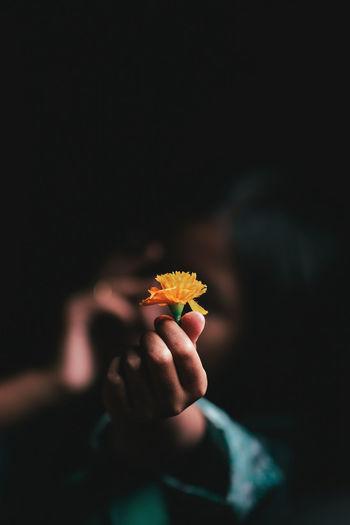 Close-up of hands holding orange flower in darkroom