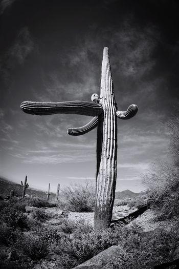 Cactus On Field Against Cloudy Sky