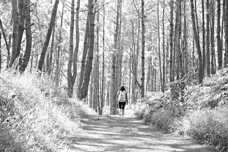 Just keep going 😊 Forest Tree Walking The Way Forward Nature Full Length Day One Person Outdoors Road Growth Landscape Adults Only Real People People Beauty In Nature Adult One Man Only Only Men