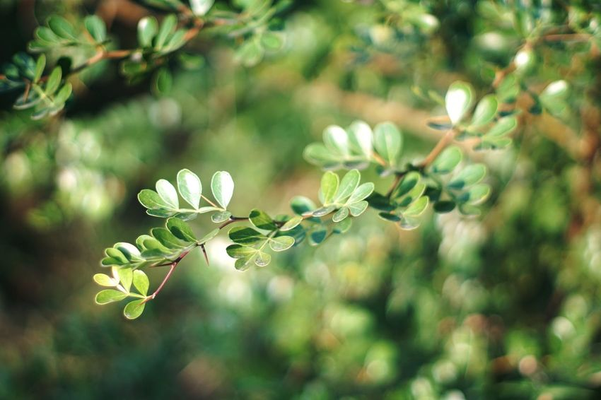 Evergreen Sonyalpha Sony A6000 Growth Nature Plant Beauty In Nature No People Day Fragility Close-up Leaf Freshness