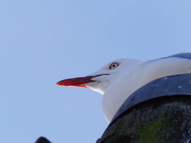 Bird Seagull Perching Beak One Animal Outdoors No People Low Angle View Nature Nature Photography EyeEm Nature Lover Beautiful To Me Lumix FZ300