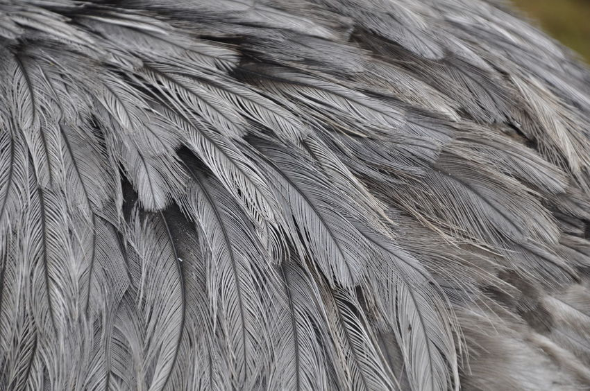 African Elephant Animal Body Part Animal Hair Animal Skin Animal Themes Animal Wildlife Animals In The Wild Close-up Day EyEmNewHere Haltern Am See Mammal Nature No People One Animal Outdoors Safari Animals Strauss Tail