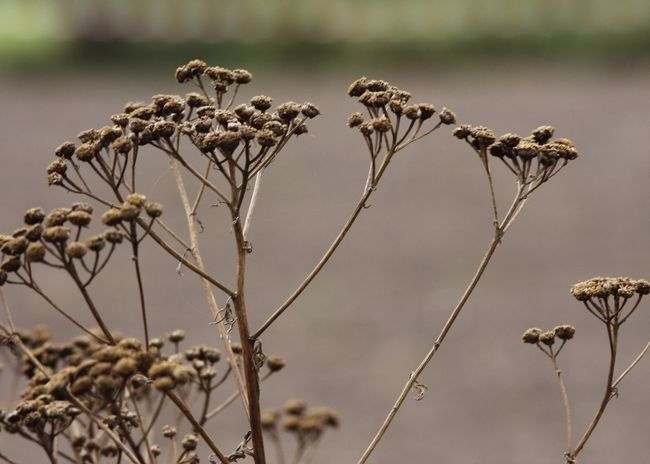 Autumn Beige Copy Space EyeEm Nature Lover Field Wildflower Abstract Beauty In Nature Branch Brown Change Close-up Day Dead Plant Dried Plant Landscape Nature Outdoors Plant Season  Tansy Wilderness