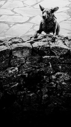 Essa estátua é uma obra de arte! Cellphone Photography MotoX2 AdobeLightroom Blackandwhite MonochromeStreetphotography Riodasostras Bruno Dias Fotografia
