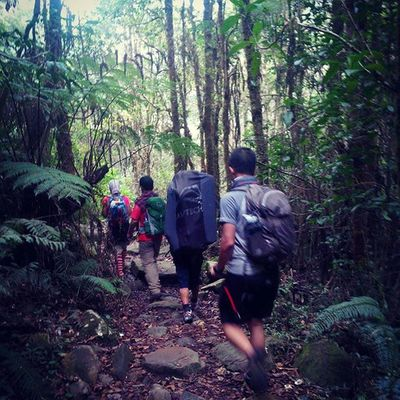we might call it a leisure but some call it work... Mount Gede - Pangrango Tropical Jungle Trek. Mountain Summit Jungle Adventure Panorama Trip INDONESIA Paradise Gunung Puncak  Jalanjalan Pendaki Mdpl Masl