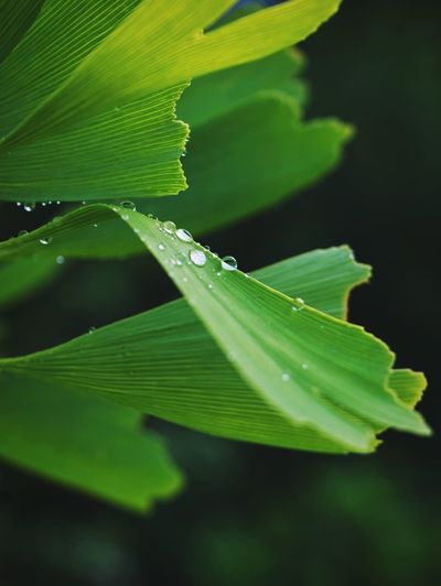 Rainy Day Leaf Plant Part Green Color Plant Nature Close-up Growth Day Focus On Foreground Water No People Drop Beauty In Nature