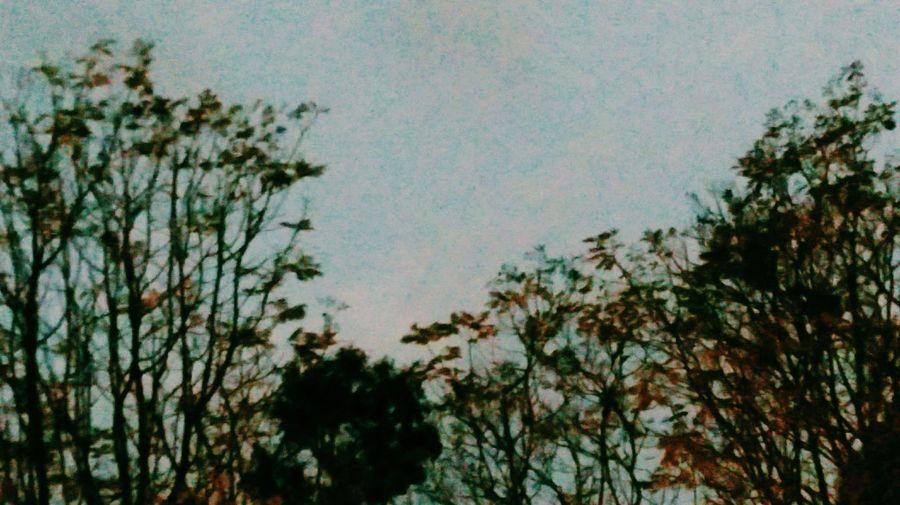 Hipster Trees Sky Hello World