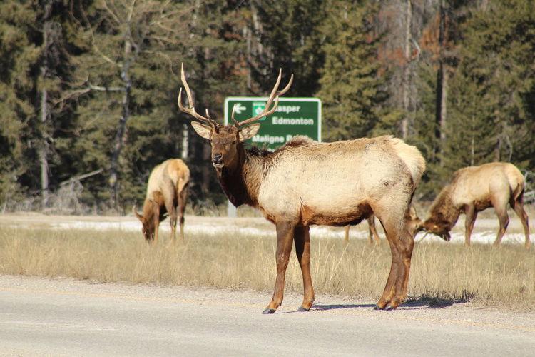 Deer on road against trees