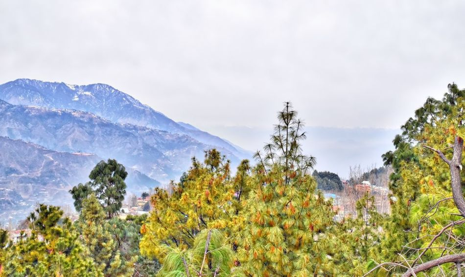 Amazing Pakistan Beauty In Nature Forest Landscape Mountain Mountain Range Murree Nature Outdoors Pine Tree Pine Woodland Scenics Snow Tree Treetop